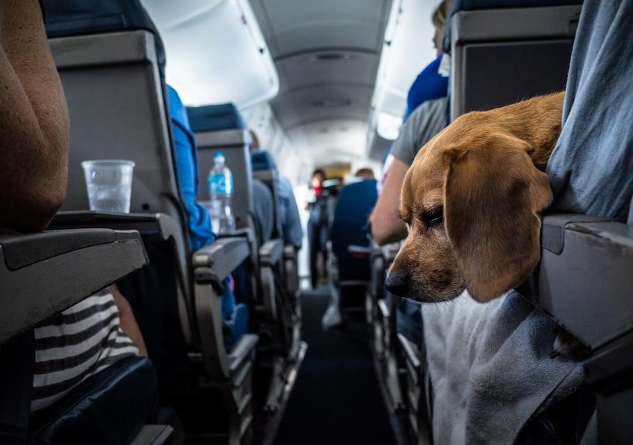 avion avec un chien